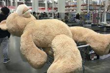 コストコで買った巨大なクマのぬいぐるみはどうやって持ち帰る???