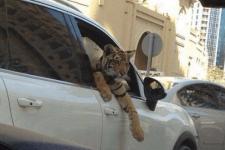 ドバイのネコたちに違和感を感じる14枚