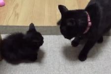今にも子猫に攻撃をしかけようとしている大人猫!そして、遂に大人猫が渾身の一撃…
