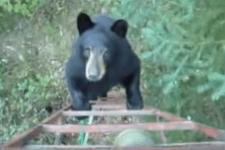 クマがはしごに登ってきた!大ピンチかと思いきや…