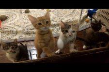 速すぎるシャカシャカ…子猫たちのアピールが激しくてかわいすぎるっ!