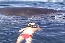 【衝撃映像】命の危機を救われたザトウクジラから信じられない恩返し!!!